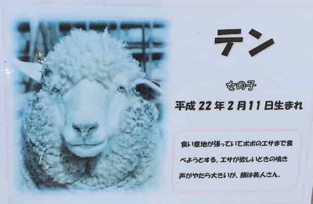 桐生ヶ丘動物園 ヒツジ