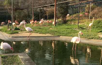 桐生ヶ丘動物園 フラミンゴ